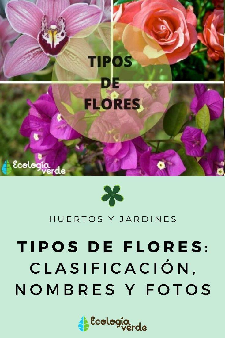 25 Tipos De Flores Clases Nombres Y Fotos Tipos De Flores Plantas De Exterior Floristerías