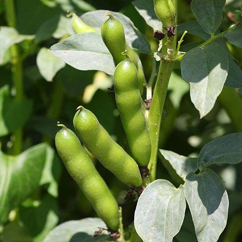 Descubre que puedes sembrar en Octubre
