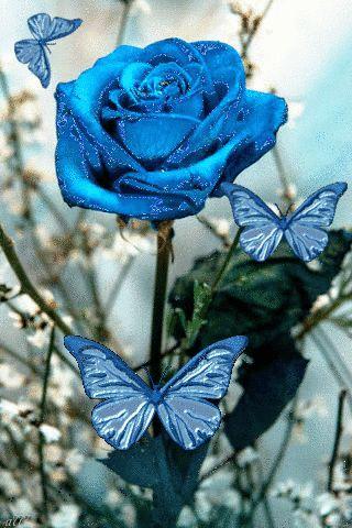 flores encontradas en la web                                                                                                                                                                                 Más