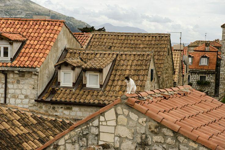 クロアチアの猫たちは赤い屋根を散歩する【画像集】