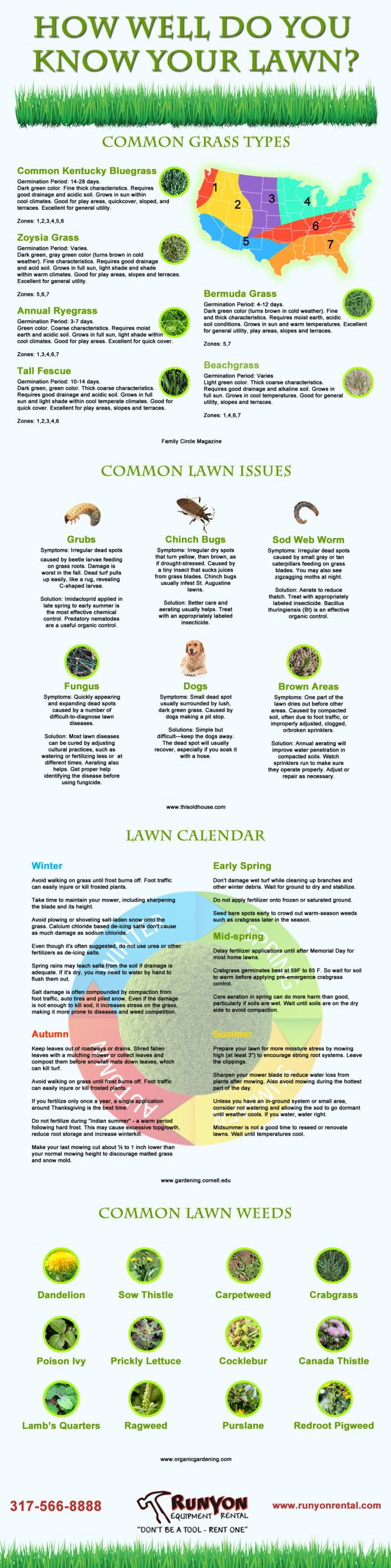 Types of lawn grass weeds - Infographic How Well Do You Know Your Lawn Types Of Grassinfographicdo