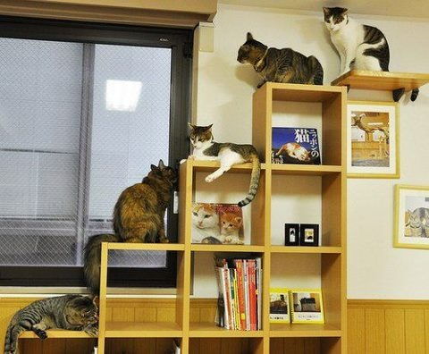 Book Shelf For Climbing Cats Cat Playgrounds Pinterest