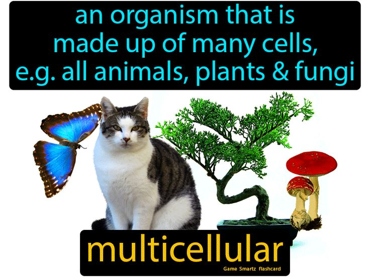 16++ Are all animals multicellular ideas