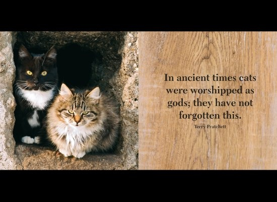 Charmant PHOTOS: Famous People On Why They Love Cats. Pet QuotesAnimal QuotesAnimal  PicsCat ...