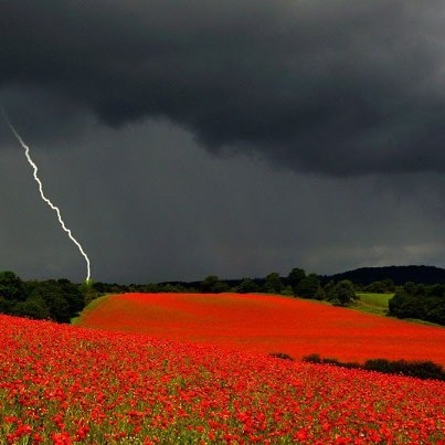 This fantastic shot of poppy fields in the Severn Valley has been awarded with the Travel Photo of the Year award http://LDN.in/3XfSnQ