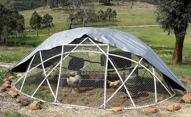 10 best images about homesteading stuff on pinterest for Big chicken tractor