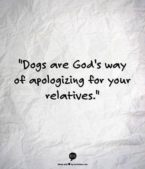 Entschuldigung angenommen ;-) | #dog #dogs #hund #hunde