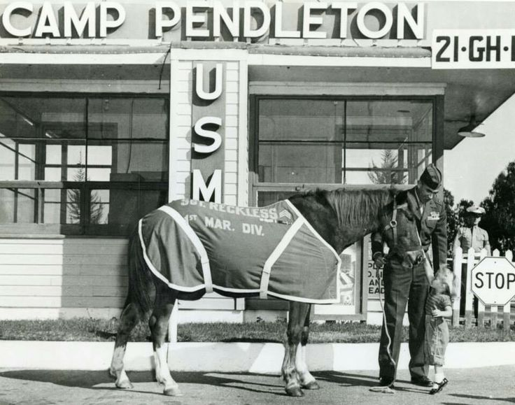 Sgt Reckless stands with Lt Eric Pedersen as they greet a little girl at the main gate of Camp Pendleton some time in the late 1950's. Reckless was a small Mongolian mare who joined the marines to carry ammunition to the front lines for the 75mm Recoilless Rifle Platoon of the 5th Marines.   Official USMC photograph.