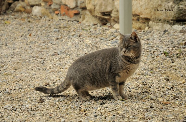 Cat from Sirmione... - Taken in Sirmione. (Lombardia, Italy) (December 2016)