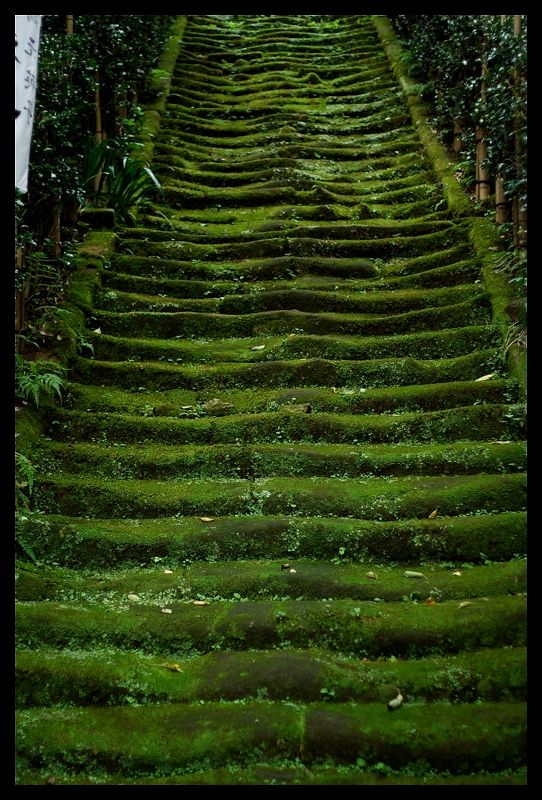 Mossy stairs at Sugimoto temple, Kamakura, Japan