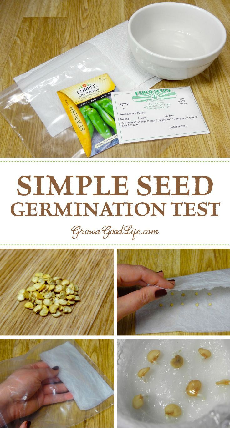 Before you throw those old seed packages away, test them to see if they are still viable using this simple germination test.