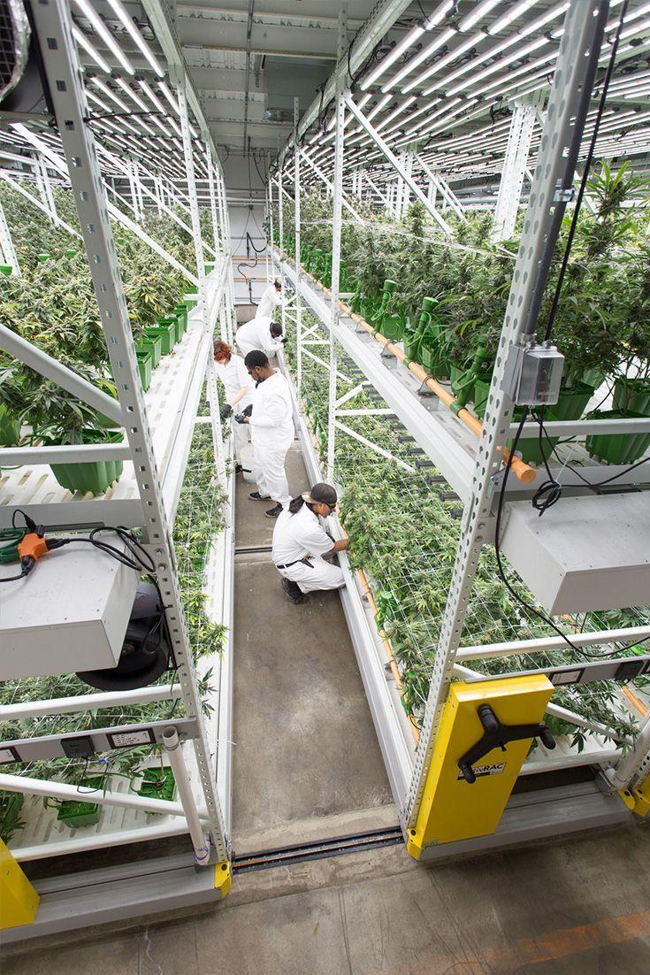 Grow Room Setup: Pin On Cannabis Grow Solutions