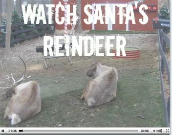 Santa's Live Reindeer Cam  Christmas is here!  Check out Santa's Live Reindeer Cam and watch Santa feed his reindeer each day at 11:00 am, 6 pm, and 9 pm est.