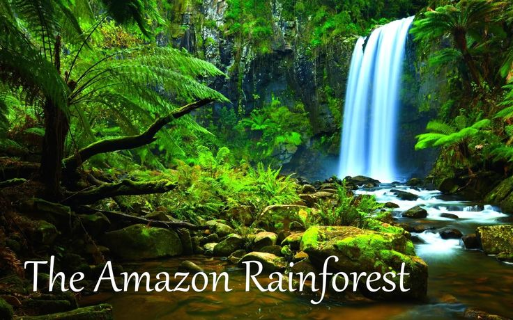 The Amazon Rainforest Facts (HD)