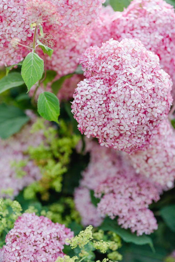 Sommersalat Mit Grillgemuse Rezept Rosa Garten Hortensienpflanze Schone Blumen