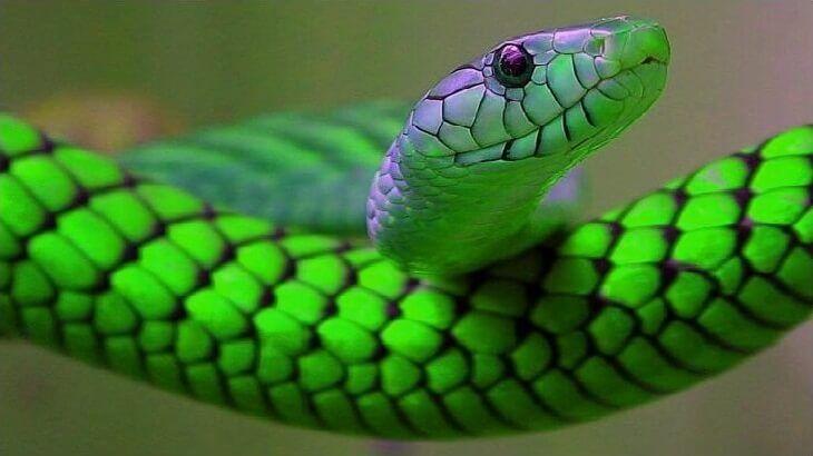 تفسير حلم دخول الثعبان في الفم Snake Animals