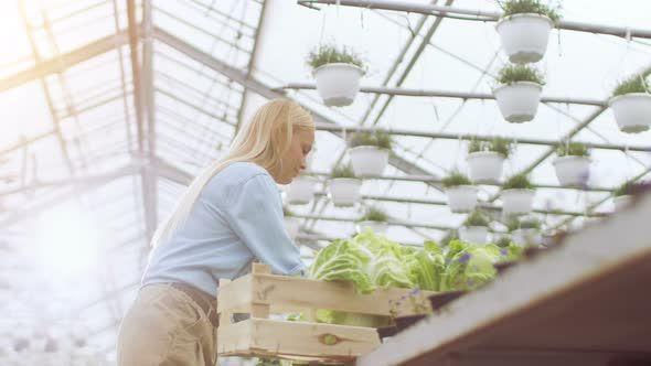 Hard Working Female Farmer Packs Box with Vegetables.