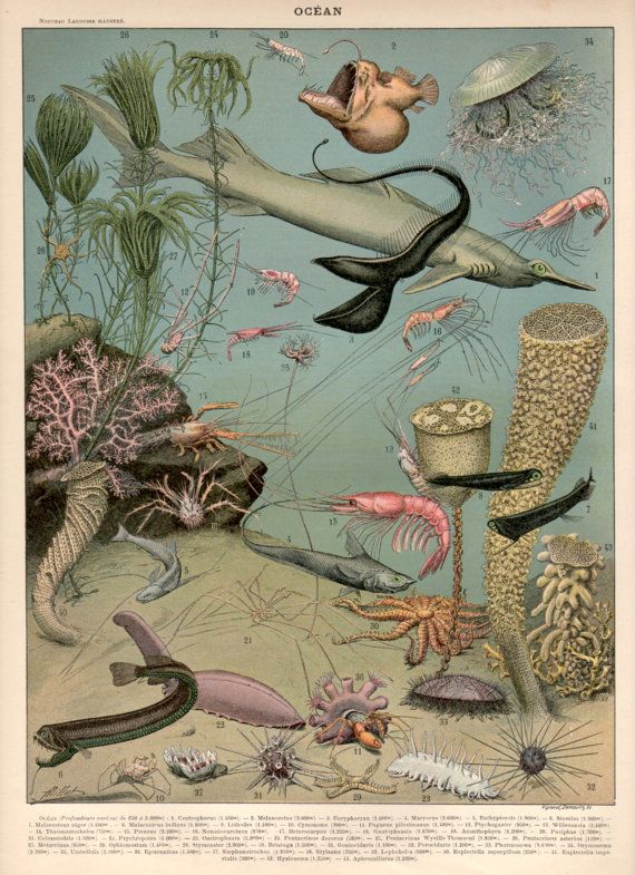 Underwater Seascape Antique Print 1897 Lithograph by Craftissimo, €25.00