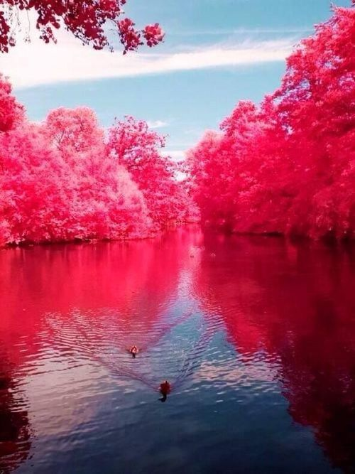 Cherry River, Nyugat-Virginia