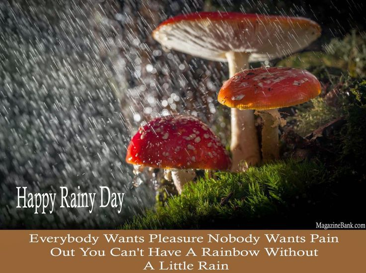 Blessed Rainy Day Quotes: Happy Rainy Day Qoutes With Latest Pictures For Lover