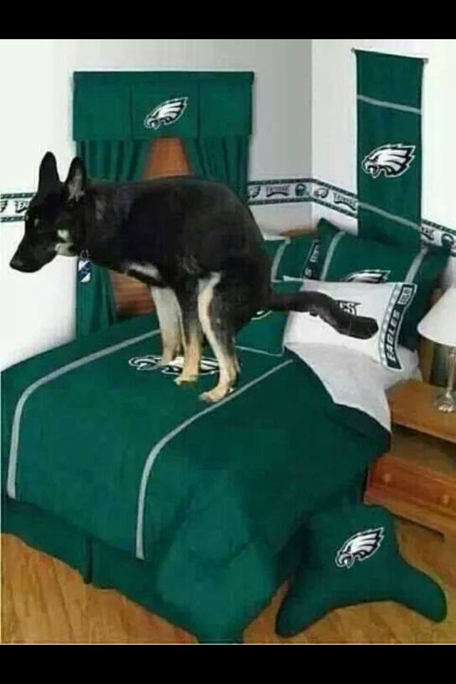 NFL Philadelphia Eagles suck! Wouldn't be mad if my dog did this!