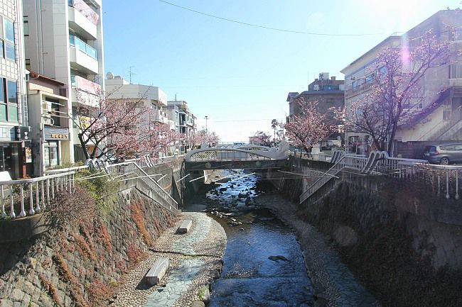 Sam's Japan Travel Journal: Early Blooming in Atami