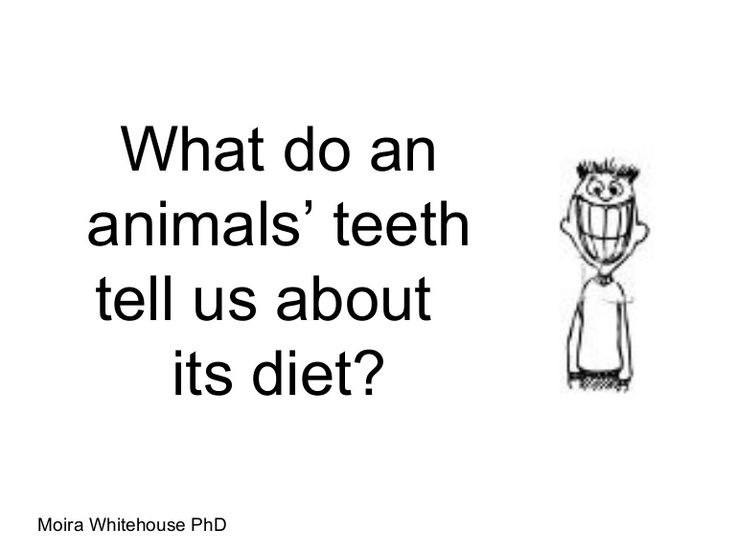 Short presentation about teeth and what they tell us about their owners: carnivore: meaning 'meat eater, omnivore: eats food of both plant and animal or Herbivores --eat plants