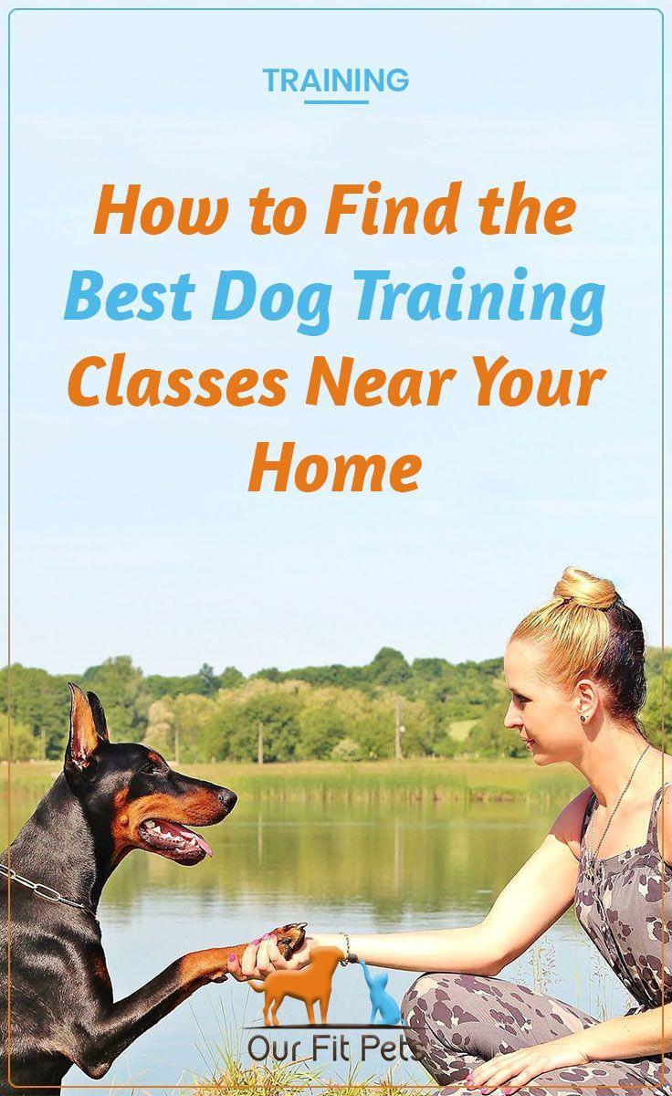 How To Find The Best Dog Training Classes Near Your Home Best