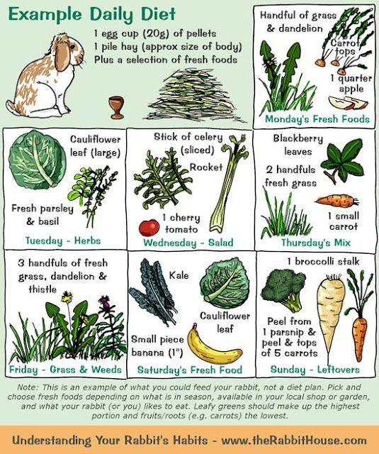 Herbs for Rabbits- An Introduction