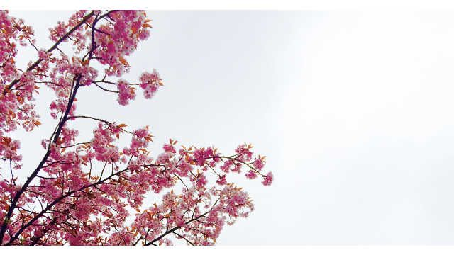 The Beauty Of The Four Seasons The Creator S Miraculous Deeds Blossom Trees Most Beautiful Flowers Cherry Blossom Tree