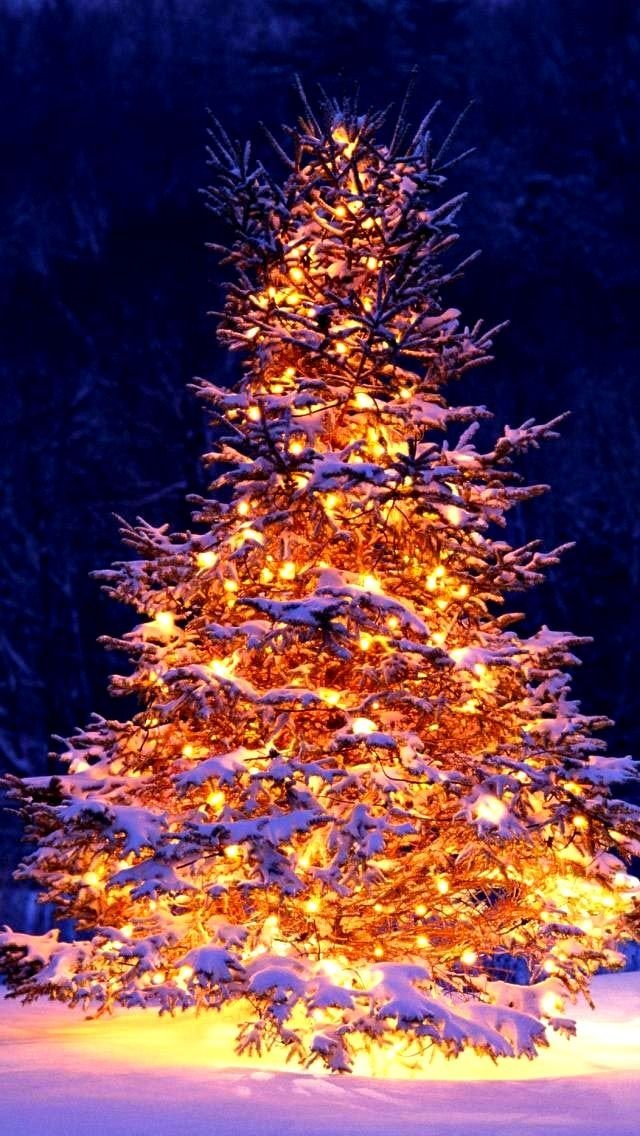 Christmas Tree Christmas Tree Wallpapers 4k Free Iphone Mobile Games Marry Christmas Wallpaper Christmas Wallpaper Hanging Christmas Lights