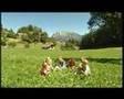 Nice Video from www.neuhof.it