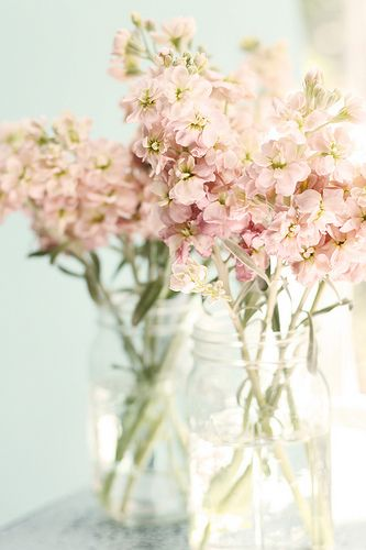 fragrant stock in jars. Love the blush pink simple flowers. elegant!