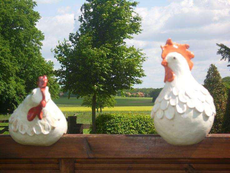 2 Hühner auf der Stange