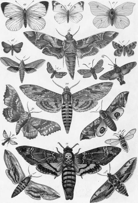 ummmm: Buffalo Bill (psycho-killer fr. Silence of the Lambs) called and he wants his CREEPY moth collection back!!!