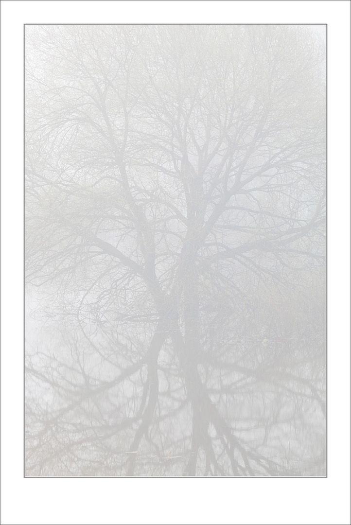 Russia Spring 2014 Dense fog, turning the world into a graphic outline ---------------------------------------------------------------------------------- Россия весна 2014 Плотные туманы, превращающий мир в графический набросок  #photorussia#rusphoto_top#canon_photos#canonrussia#CanonRussia#rosphoto