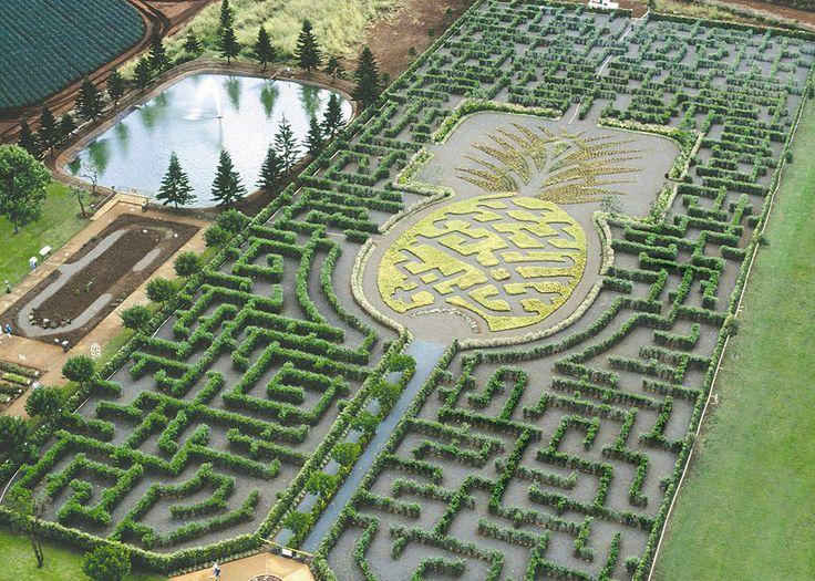 Le labyrinthe Pineapple Garden Maze Le plus grand labyrinthe permanent du monde se trouve à Hawaï. Situé au beau milieu d'une plantation d'ananas sur l'île d'Oahu, il a été conçu en forme d'ananas avec près de 11 400 plantes tropicales au plus grand bonheur de ses visiteurs. Ses nombreuses allées composées de buissons en tout genre recouvrent au total 4,8 km.