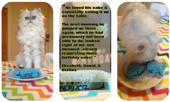 about Birthday Cake & Treats For Cats! on Pinterest  Birthday cakes ...