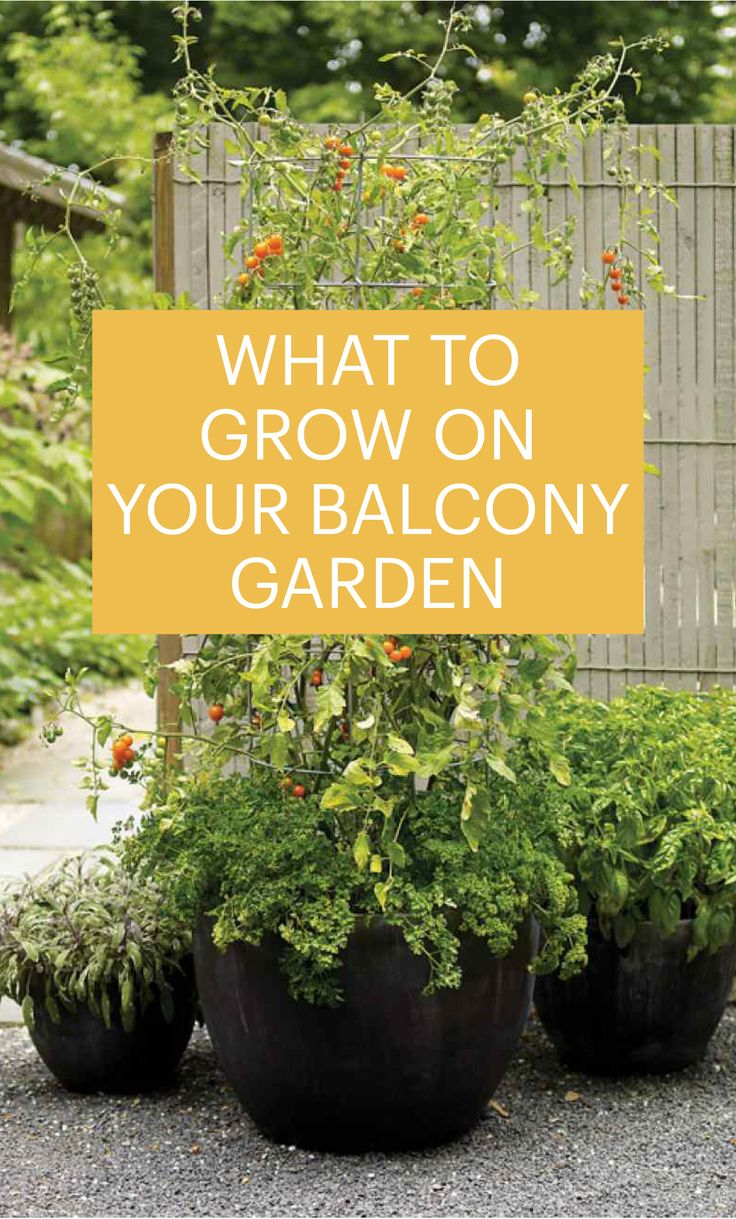 What to Grown on Your Balcony Garden | Martha Stewart Living - Because not all plants play well together, picking to right plants for your container is key to its success.