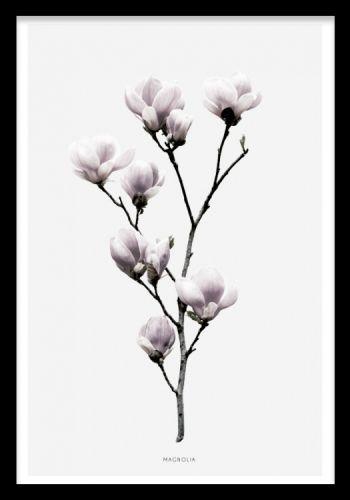 Magnolia, poster. Smukke plakater til stuen eller soveværelset. Posters og plakater. www.desenio.dk