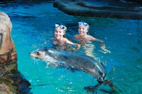 Seal Swim, UnderWater World, Sunshine Coast, Queensland #airnzsunshine
