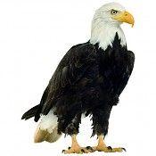 Studio Bluebird muursticker Eagle