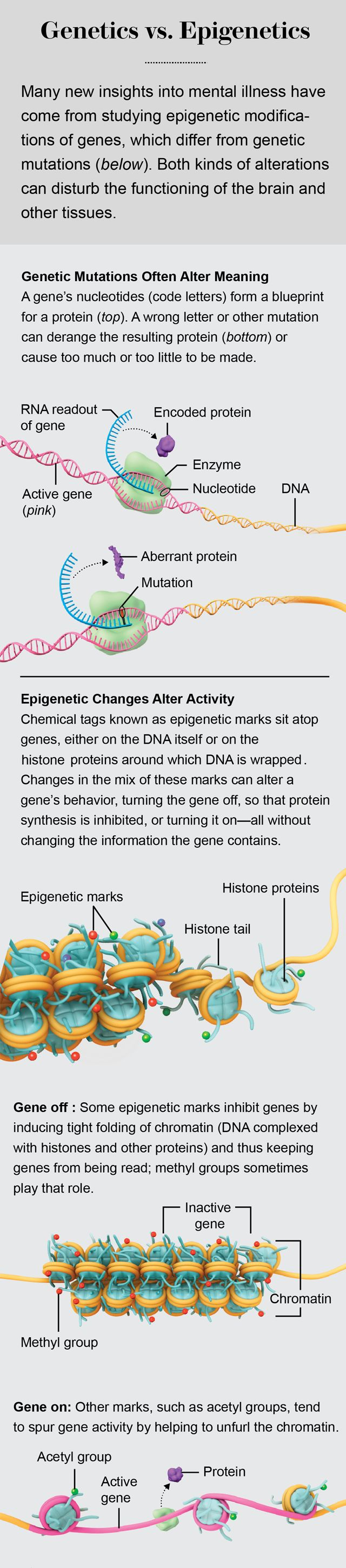 The Genetic Makeup Of An Organism Simple 158 Best Genetic Molecular & Micro Biology Images On Pinterest Design Inspiration