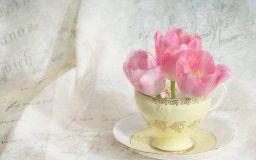 tulips pink cup saucer flower a letter vintage