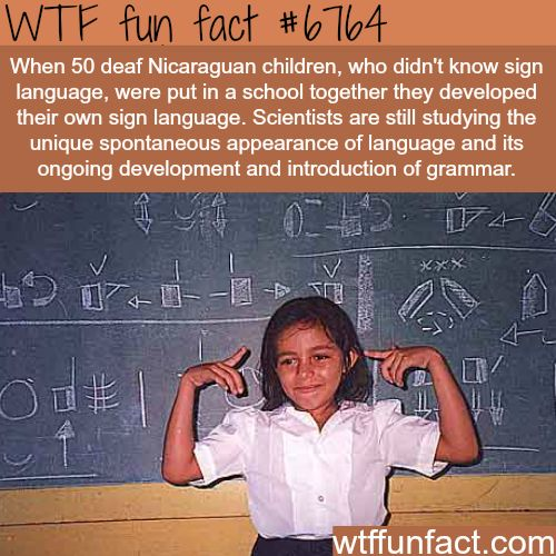 How 50 deaf children created their own sign language - WTF fun fact