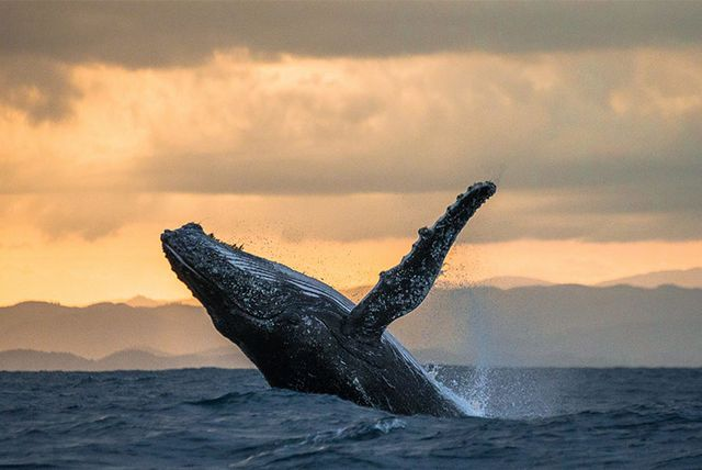 Choice of Iceland Excursions - Northern Lights, Blue Lagoon, Whale Watching + More!