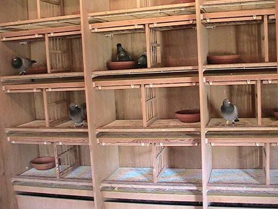 219 Best Pigeon Coop Images On Pinterest Pigeon Loft