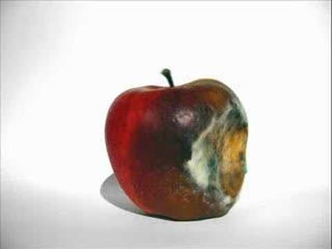▶ Rotting Apple (Mould) - YouTube
