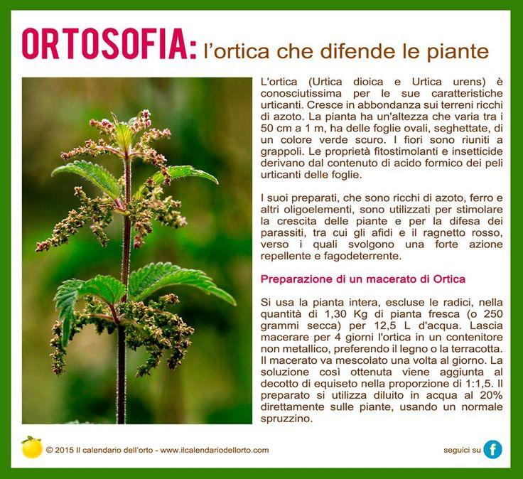 l'ortica che difende le piante