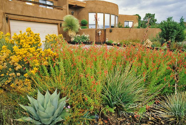 1000 images about curb appeal on pinterest drought for Landscaping rocks albuquerque